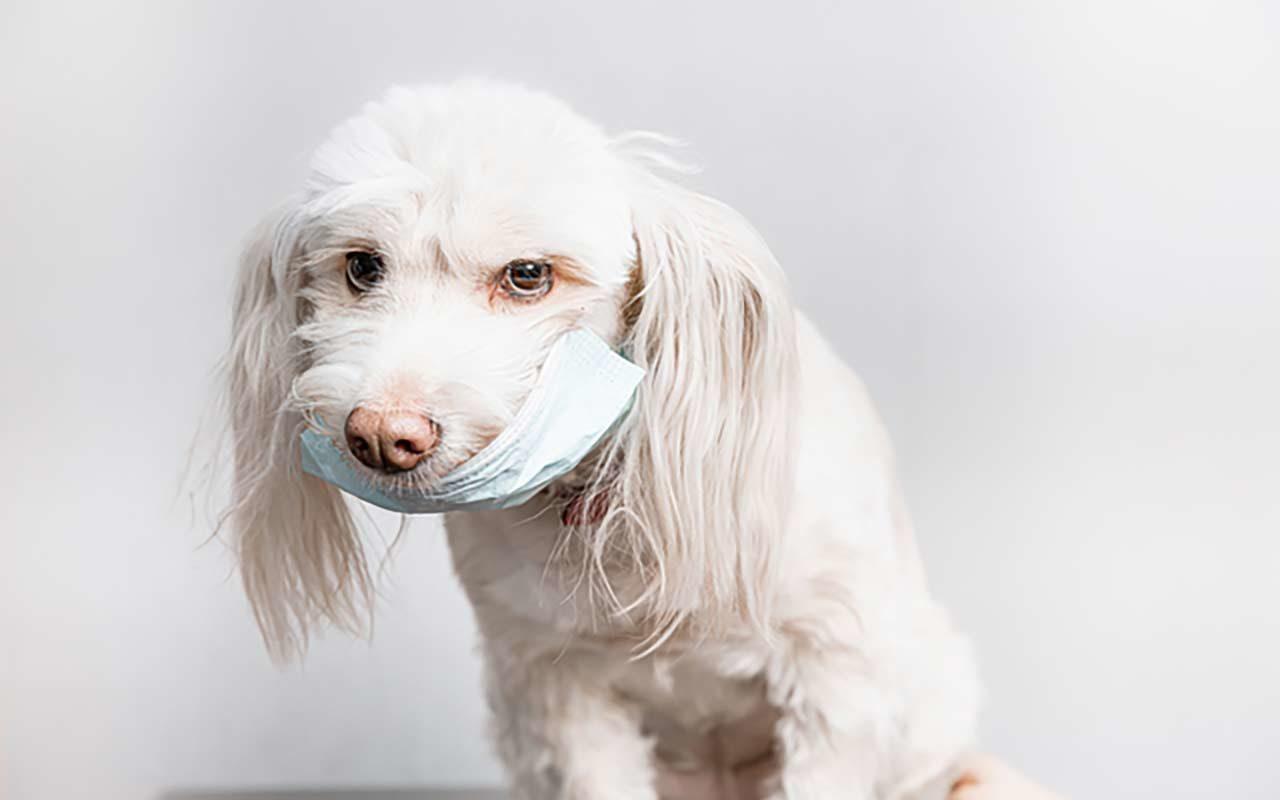 知っておかないと後悔、犬にもアレルギがある