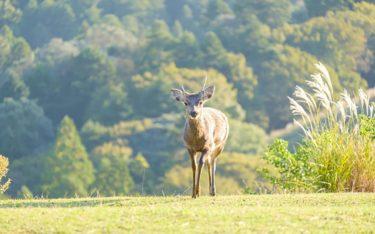 鹿肉ドッグフードが人気の理由